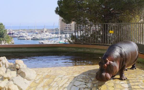 Зоопарк в Монако